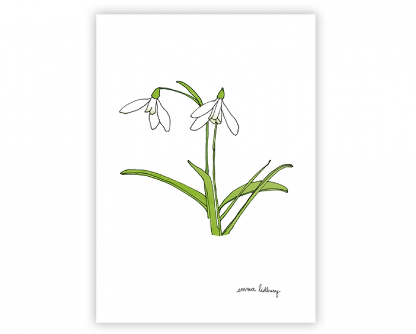 lacarteriedemma-lidbury-carte-Illustration-perce-neige-blanc-fleur
